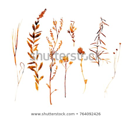 dry leaves on the grass stock photo © nito