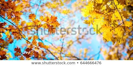 Sonbahar kahverengi doğa sahne altın çim Stok fotoğraf © fotoduki