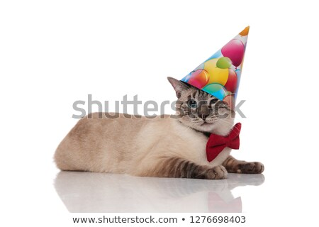 gentleman burmese cat lying and wearing a birthday hat Stock photo © feedough