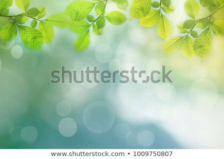 Természetes levelek zöld levelek friss terv levél Stock fotó © odina222