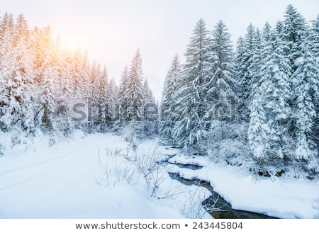 mountain stream in snowy mountains stock photo © lovleah