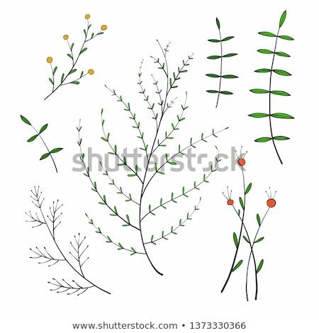 temporada · de · otoño · vector · dibujado · a · mano · acuarela · pintura · arte - foto stock © marish