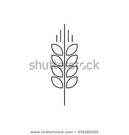 Healthy Food Wheat Spikelet Vector Thin Line Icon Stock photo © pikepicture