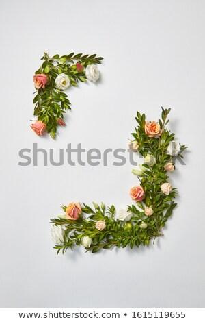вертикальный углу кадр вечнозеленый роз романтические Сток-фото © artjazz