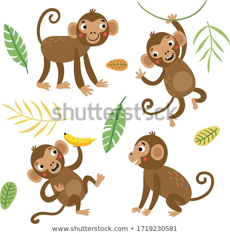 Małpa asia futra ssak Zdjęcia stock © craig