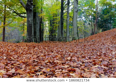 秋天 · 下降 · 公園 · 木 · 路徑 · 太陽 - 商業照片 © samsem