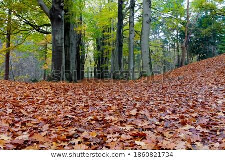 Forest Zoom Stock photo © samsem