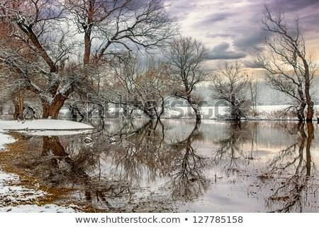 belo · inverno · paisagem · lago · Balaton · Hungria - foto stock © fesus