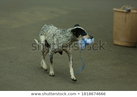 green bag leash isolated on white stock photo © shutswis