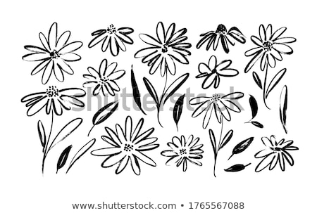 White Aster Daisies. Stock photo © ElinaManninen