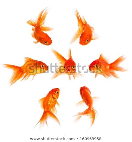 Goldfish blanche bébé design art amusement Photo stock © Tatik22
