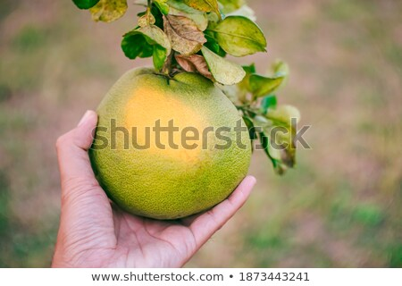 Сток-фото: красивой · зеленый · желтый · грейпфрут · макроса · подробность