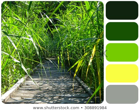 Green grass colour palette swatch Stock photo © REDPIXEL