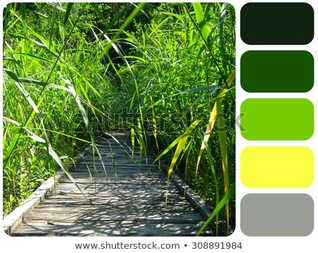 Green grass colour palette swatch Stock photo © REDPIXEL