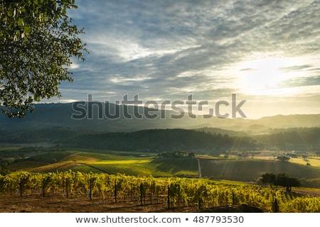 Yellow Vineyards Vista Napa California Stock photo © billperry