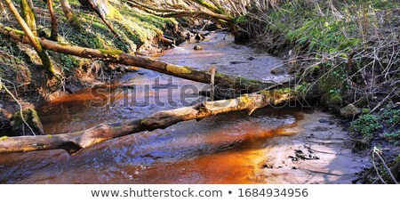 Water Outflow in Woodland Stock photo © suerob