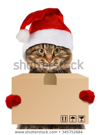 Cat in a Christmas cap with a cart on white Stock photo © vlad_star