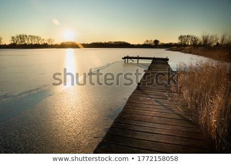 reed in frozen lake stock photo © nneirda