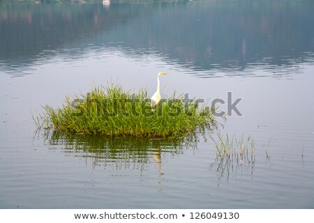 Gólya fű férfi tó India madár Stock fotó © meinzahn