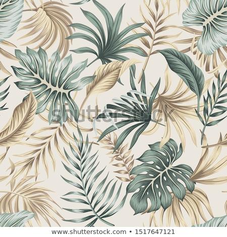 velho · marrom · damasco · papel · pergaminho - foto stock © nicemonkey