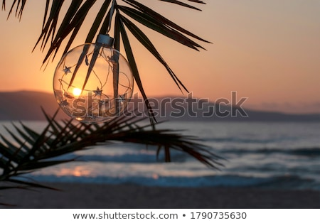 palms trees on the beach during bright day stock photo © elnur