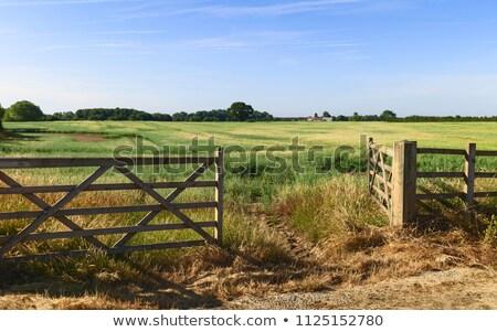 Open gate to field stock photo © olandsfokus