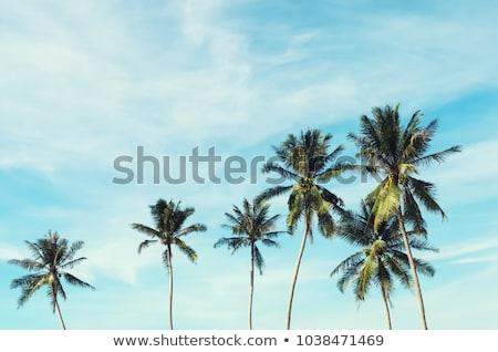 pálmafák · kék · ég · fehér · felhő · copy · space · tengerpart - stock fotó © olandsfokus