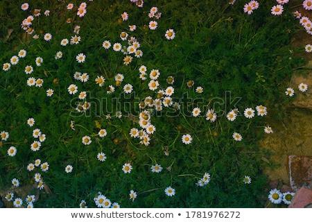 Branco sementes coleção secar ciência planta Foto stock © ziprashantzi