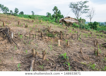 Filippijnen hemel natuur asia landbouw verontreiniging Stockfoto © fazon1