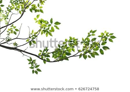 Verde branco imagem cópia espaço árvore Foto stock © w20er
