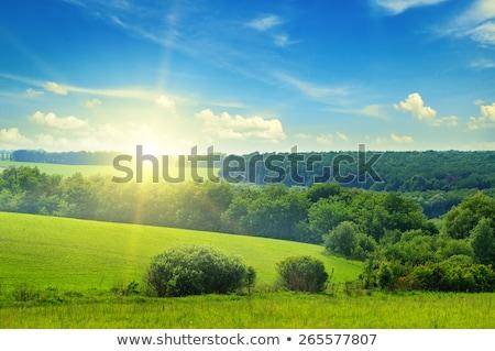 mező · fa · alkonyat · égbolt · Németország · fény - stock fotó © meinzahn