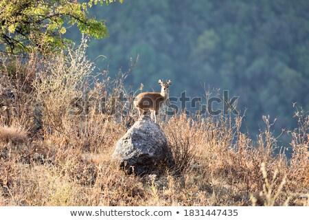 áll kövek park Dél-Afrika utazás Afrika Stock fotó © simoneeman