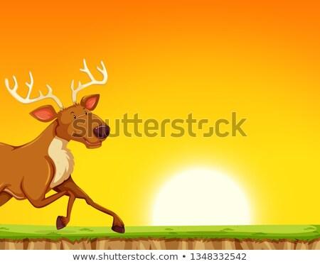 Rendier lopen verleden zonsondergang illustratie gras Stockfoto © bluering