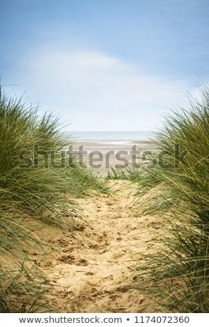 duna · grama · cerca · areia · ficar · cedo - foto stock © andreasberheide