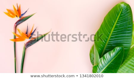 zomer · landschap · witte · tropische · bladeren · frame - stockfoto © neirfy