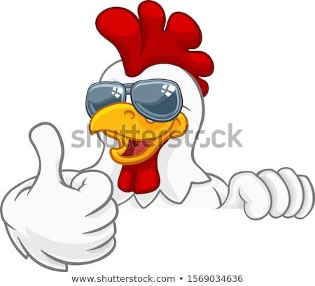 Tavuk horoz kuş güneş gözlüğü karikatür Stok fotoğraf © Krisdog