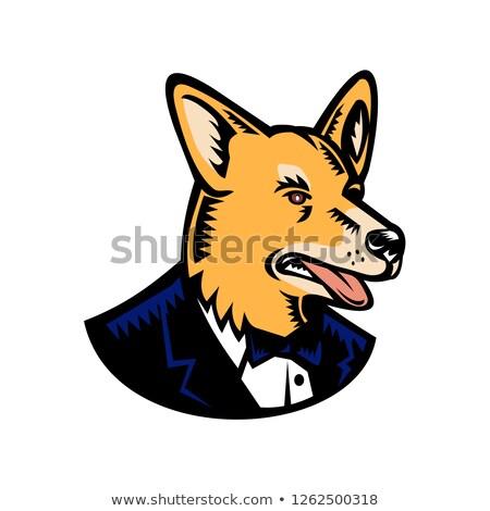 犬 · 動物 · ほ乳類 · 国内の · 純血 - ストックフォト © patrimonio