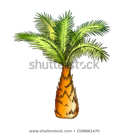Palm Tree Sabal Minor Miami Palmetto Color Vector Stock photo © pikepicture