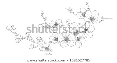 Sakura çiçek şube kiraz çiçeği Retro vektör Stok fotoğraf © pikepicture