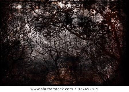 Bezlistny zimą czasu streszczenie drzew rząd Zdjęcia stock © prill