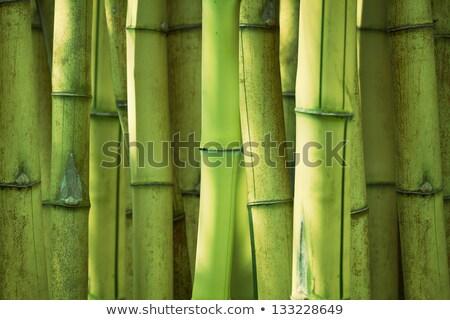 green bamboo stems are horizontal stock photo © ruslanomega