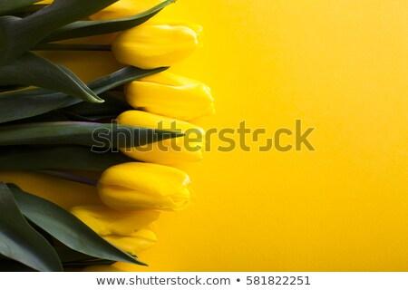 herrlich · Bouquet · Tulpen · Vase · farbenreich · Glas - stock foto © julietphotography