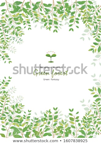 Branch of sprout with green leaves vector background stock photo © krabata