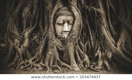 ancient buddha head in tree root Stock photo © vichie81