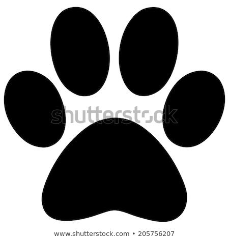Poot print ingesteld vector hond ontwerp Stockfoto © burakowski