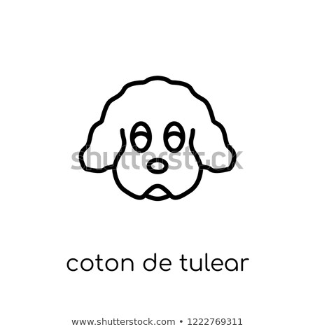 kutya · stúdiófelvétel · kicsi · fehér · fajtiszta · tiszta - stock fotó © bigandt