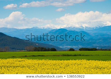 raps field with pyrenees in distance stock photo © nejron