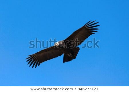 Repülés Peru Amerika madár Föld égbolt Stock fotó © Hofmeester