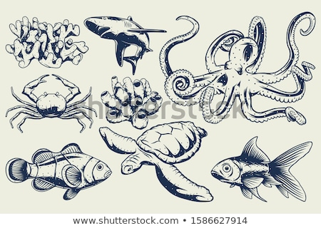 Small octopus. Stock photo © Fisher