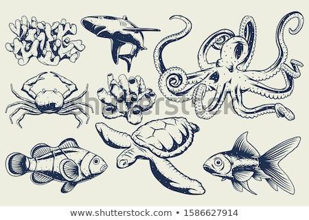 nyers · polip · főzés · fűszer · kő · asztal - stock fotó © fisher